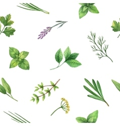 Watercolor seamless pattern hand drawn herb vector image