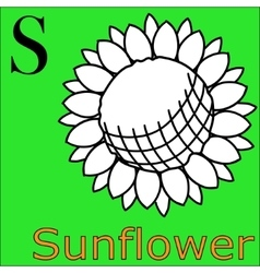 S letter alphabet coloring book sunflower vector