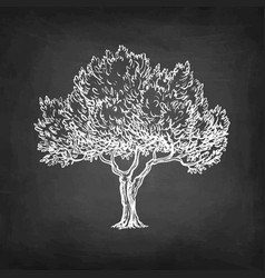 chalk sketch of olive tree vector image vector image
