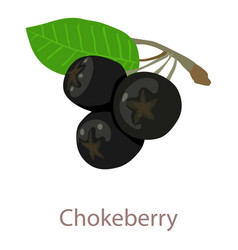 Chokeberry icon isometric 3d style vector