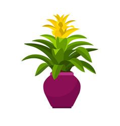 Guzmania house plant in flower pot vector