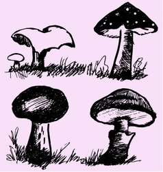 Mushrooms edible inedible vector