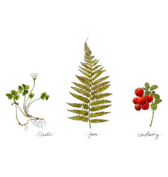 wild plants hand drawn in color vector image