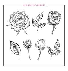 Flower set hand drawn rose vector image