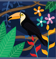 toucan bird in dark background vector image vector image