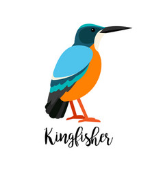 Exotic tropical kingbisher bird vector
