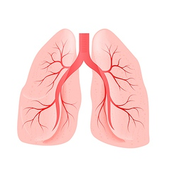 lungs of the person vector image vector image