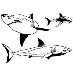 Great white shark set vector