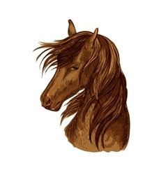 Horse head sketch of brown racehorse vector