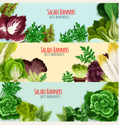 salad greens and leaf vegetables banner set vector image vector image