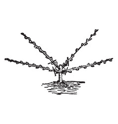 Fan shaped pruning vintage vector