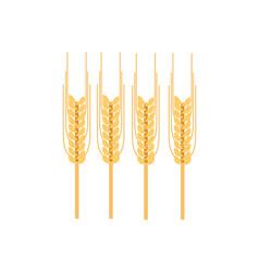 Ripe ear of wheat icon vector