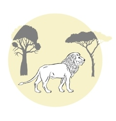 Lion between savanna trees vector