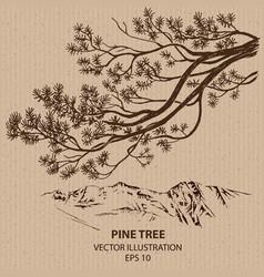 Branch of Pine Tree vector image vector image