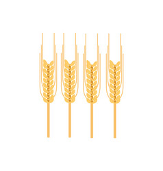 Ripe ear of wheat icon vector
