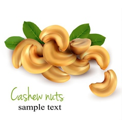 Cashew nuts vector