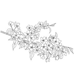 Flowering apple tree branch vector