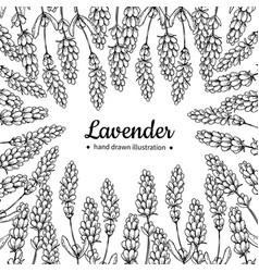 Lavender drawing frame isolated wild vector