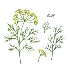 Watercolor branches and leaves of dill vector image