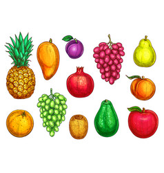Isolated icons of exotic garden fruits vector