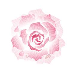 hand drawn decorative rose vector image