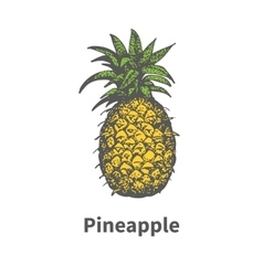 Hand-drawn single yellow ripe pineapple vector