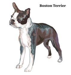 Colored decorative standing portrait of boston vector