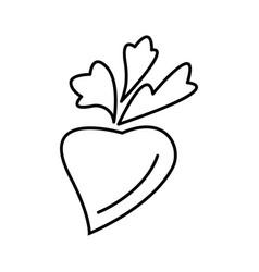 thin line radish icon vector image