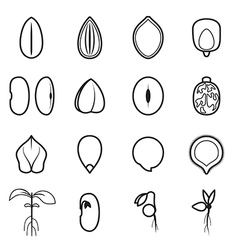Seed icon set vector