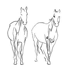 Doble horse vector