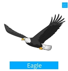 Eagle learn birds educational game vector image vector image