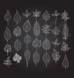 Hand drawn leaves set vector
