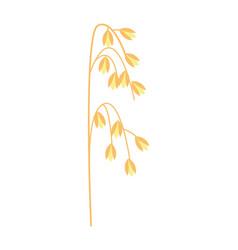 Ripe ear of oat icon vector