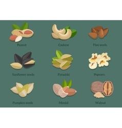 Set Natural Walnut Grain Flat Design vector image