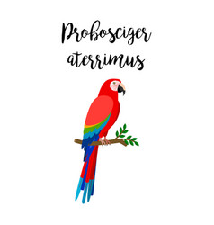 exotic tropical probosciger aterrimus bird vector image
