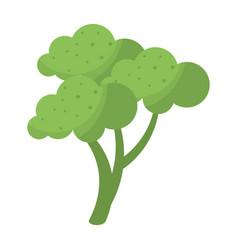 Broccoli vegetable diet nutrition vector