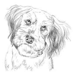 fluffy dog hand drawing portrait vector image vector image