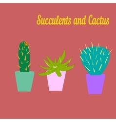 Cactus and succulent draw vector image