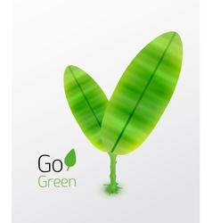 Green plant with leaves nature concept vector