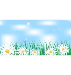 Camomile in grass vector