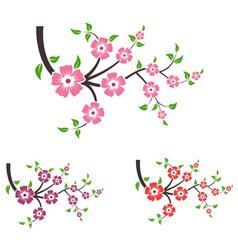 Branches of sakura vector image