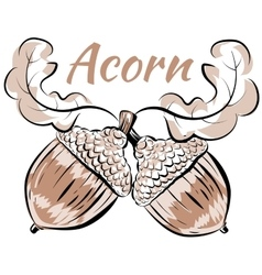 oak branch two acorns vector image