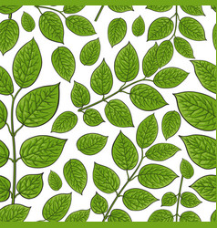 Seamless pattern of birch honeysuckle leaves vector