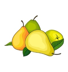 Pear fruit vector