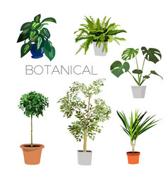 plants collection vector image
