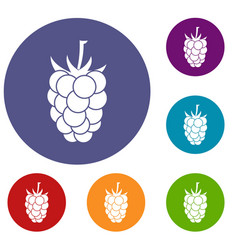 Blackberry fruit icons set vector