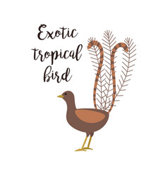 exotic tropical brown bird vector image