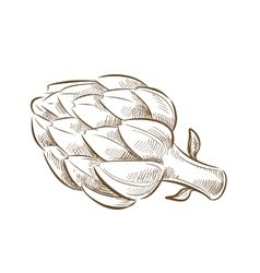 Picture of artichoke vector