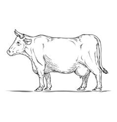 retro of a cow vector image
