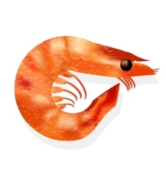 Realistic shrimp isolated vector